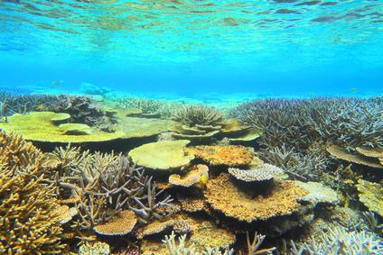 宮古島 八重干瀬の珊瑚礁