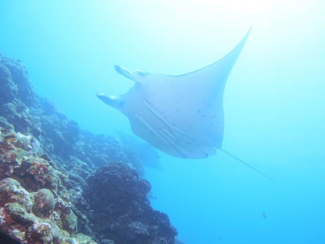 アドバンスドオープンウォーターライセンスで潜ることができる憧れの海