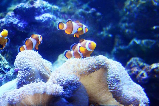水中の魚を撮影