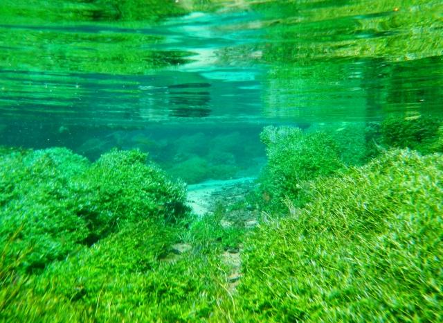 水中撮影での注意事項