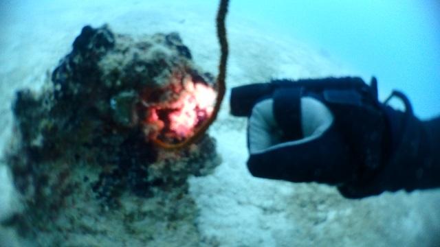 サメサンの海洋生物